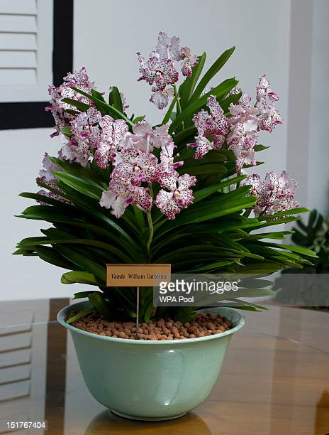 The Vanda William Catherine orchid named after Prince William Duke of Cambridge and Catherine Duchess of Cambridge is seen during their visit to...