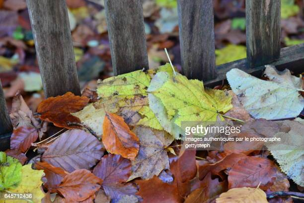The varied color leave on wooden bench