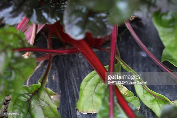 the vegetable garden of the Chef Alain Passard on november 2016 in Paris France