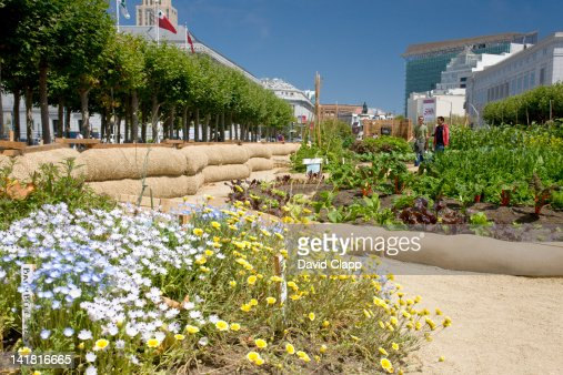 The Victory Garden, a floral and vegetable garden in the grounds of City Hall in San Francisco, California, United States of America, North America : Stock Photo