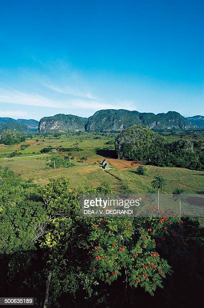 The Vinales Valley with the Mogotes in the background Pinar del Rio Province Cuba