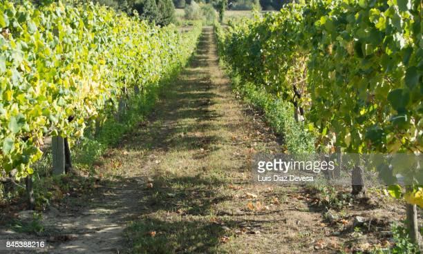 The vineyard and the granite post
