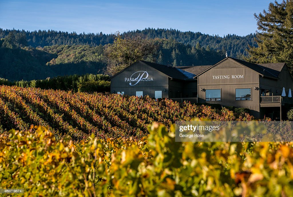 The vineyards at Passalacqua Winery begin to turn color on November 17, 2014, near Healdsburg, California. Warm sunny skies in Sonoma County Wine Country have set the stage for excellent grape growing conditions. Despite the drought, the 2014 grape harvest is early and average in terms of tonnage.