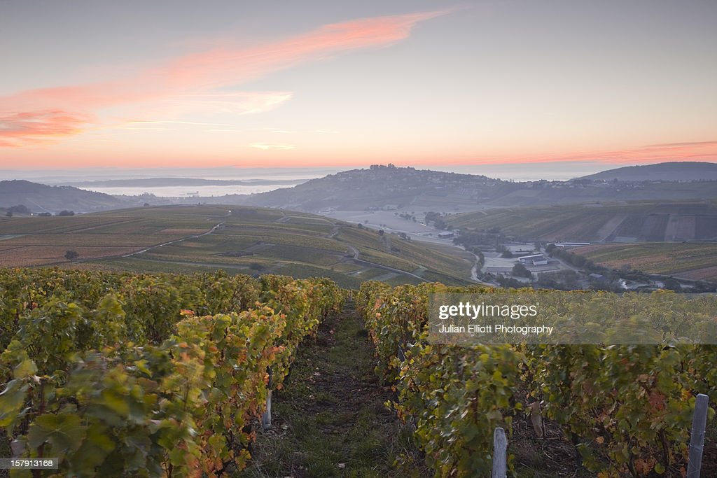 The vineyards of Sancerre during autumn.