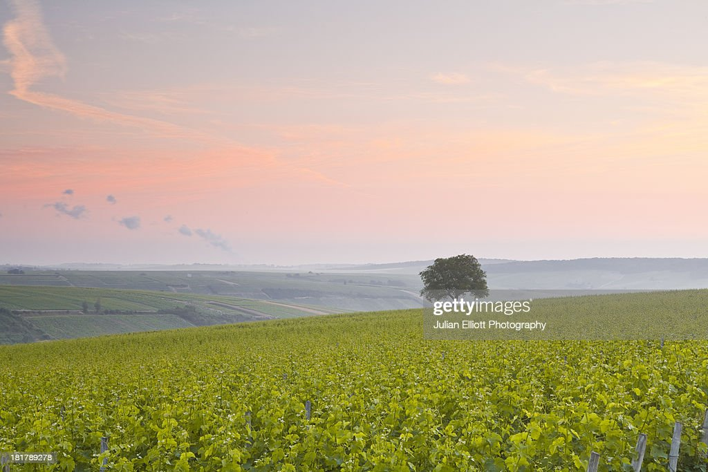 The vineyards of Sancerre in the Loire Valley.