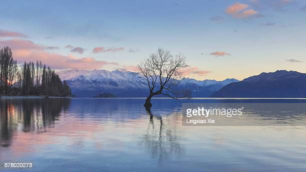 The Wanaka Tree before Sunrise