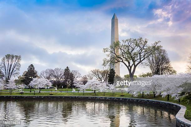 The Washington Monument with beautiful cherry blossoms
