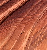 The Wave at Coyote Buttes In Arizona