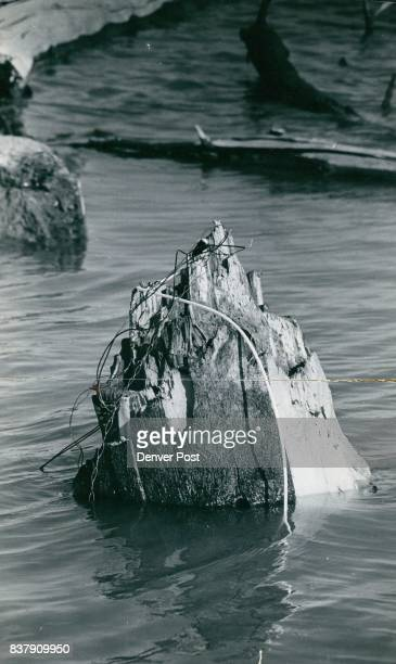 The white clotheslinelooking dynamite fuse lies draped over a jagged tree stump jutting from the water like a little iceberg Stumps like it posed...