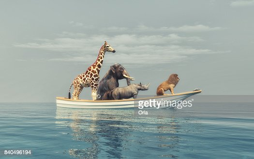 The wild animals : Stock Photo