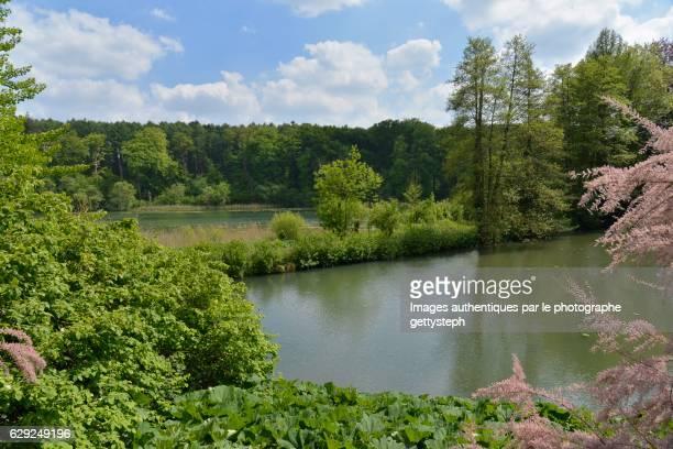 The wild vegetation around ponds in springtime