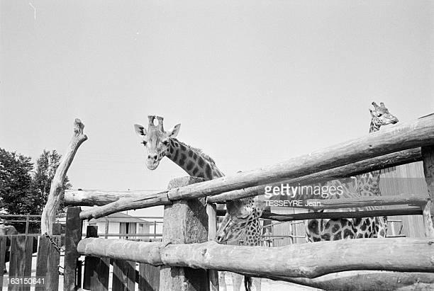 The Wildlife Park Of SaintVrain En France à SaintVrain dans l'Essone le 4 août 1975 Reportage dans le zoo de SaintVrain riche d'un millier d'animaux...