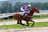 Jockey and bay akhal-teke stallion Demir-Tay race for the prize of Gundogara in Pyatigorsk, Russia.