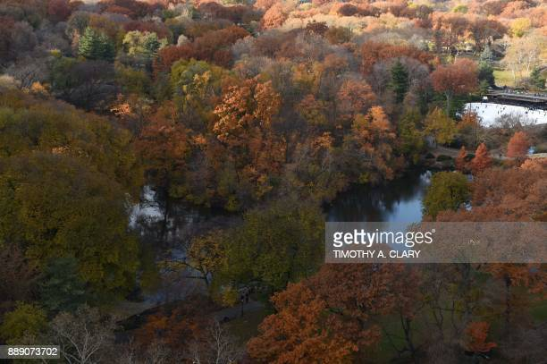 The Wollman ice skating rink sits among trees changing colors in New York's Central Park on November 28 in a view from above 5th Avenue / AFP PHOTO /...