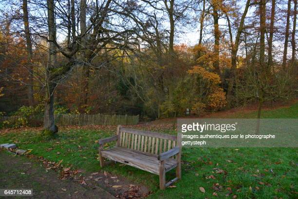 The wooden bench on lawn in middle autumnal colors
