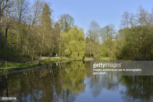 The woodland in springtime reflecting on pond