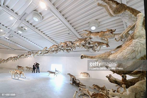 The work 'Head On' of chinese artist Cai Guo Quiang insert in the exhibit 'La Fine Del Mondo' by Curator Fabio Cavallucci for the Centro Pecci of...