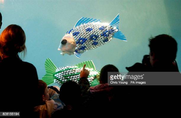 The world's first autonomouslycontrolled robotic fish was unveiled at the London Aquarium Visitors to the London Aquarium view robotic fish in a...
