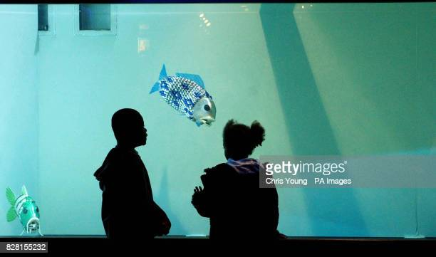 The world's first autonomouslycontrolled robotic fish were unveiled today at the London Aquarium Visitors to the London Aquarium view robotic fish in...