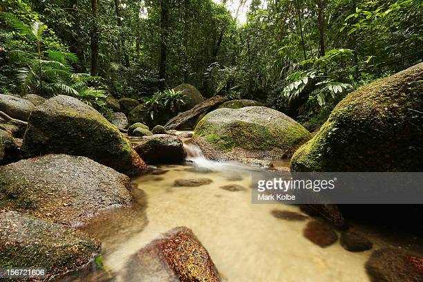 The Wurrmbu Creek is seen flowing through the world heritage listed daintree rainforest on November 15 2012 in Mossman Gorge Australia Located in Far...