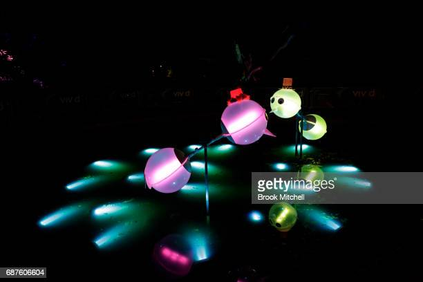 The You Lookin at Me light installation ahead of Vivid Sydney at The Royal Botanic Gardens on May 24 2017 in Sydney Australia Vivid Sydney is an...