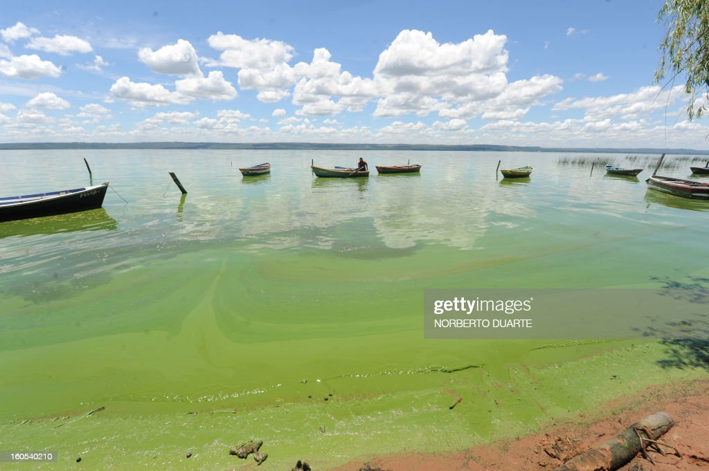 The Ypacarai Lake near Aregua, Paraguay, on February 2, 2013. Five months after the finding of cyanobacteria in its waters, the pollution in the once blue waters of the Ypacarai lake is worse than ever, chasing with its fetid emanations many Aregua residents toward other municipalities. AFP PHOTO/Norberto DUARTE