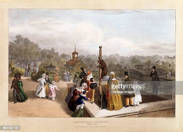 The Zoological Gardens at Regent's Park London 1835 A group of families lean against the railing of the bear pit watching the bears climbimg up a...