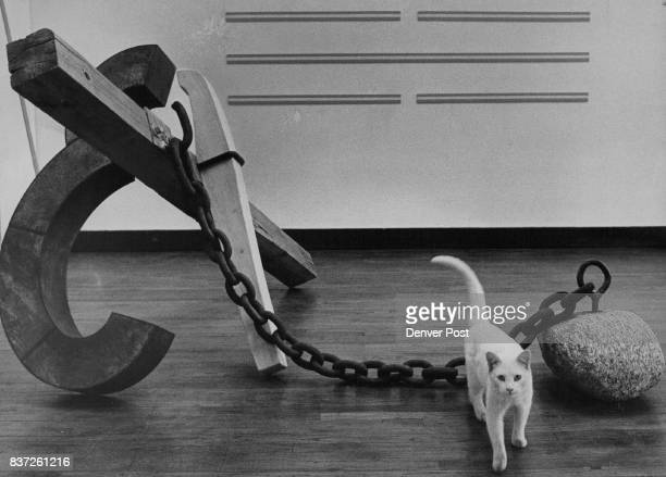 The Zune Studios resident cat plays his own 'I Ching' game in current exhibit by frank Bonasso and Chris Byars who did 'ball and chain' sculpture...