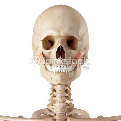 El Músculo Cigomático Mayor Foto de stock | Thinkstock