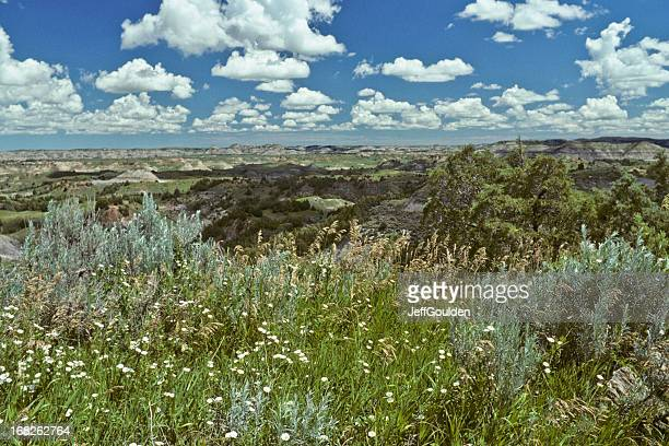 Badland Meadow and Wildflowers