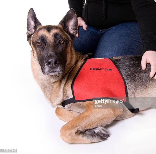 Thérapie pour chien