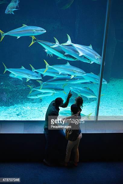 Il y a à voir les créatures de la mer