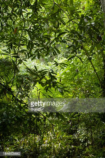 Thick, lush and green Amazon forest