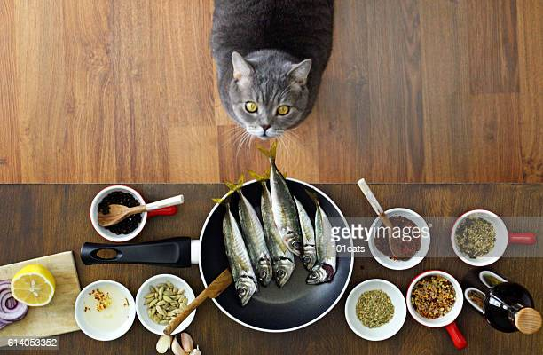 Thief cat looking fishes on the frying pan