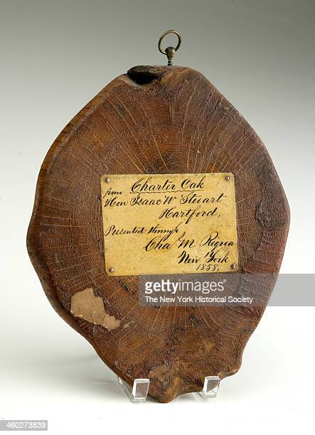 Thin cross section of Charter Oak with paper label affixed with nails to front and brass ring for hanging 1688 The Charter Oak of Hartford...