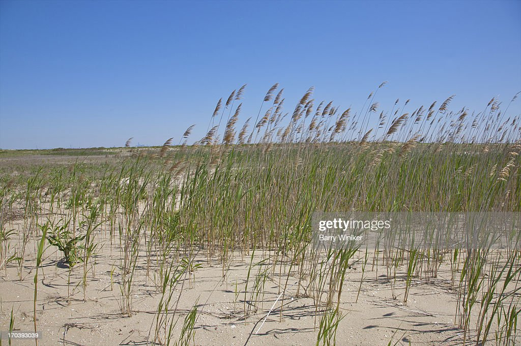 Thin green and golden grasses atop sand