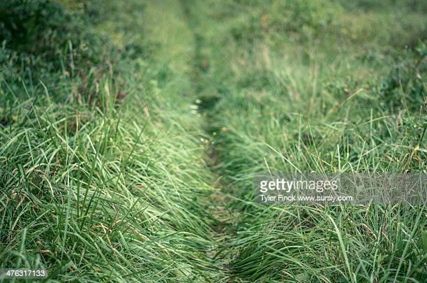Thin Green Trail