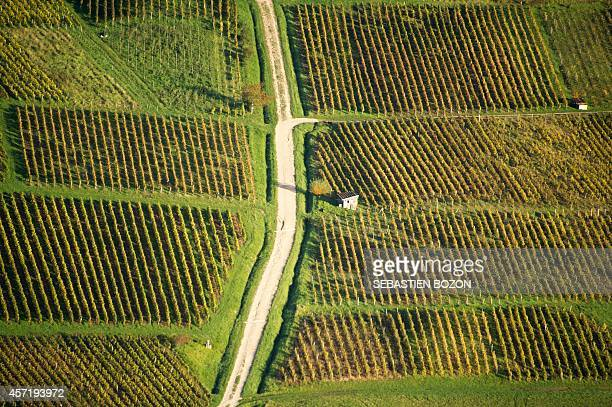 This aerial picture taken on October 14 2014 shows the vineyard of Jura in Arbois AFP PHOTO / SEBASTIEN BOZON