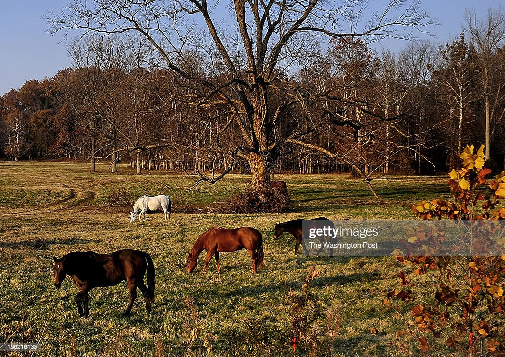 This bucolic meadow is next door to the Long Hollow Baptist Church where Beth Cox and family attend. Beth Cox is a Christian Republican who felt disappointed and discouraged by the result of the presidential election.(Photo by Michael S. Williamson/The Washington Post via Getty Images