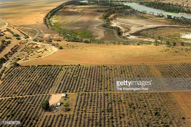 This citrus farm along the Murray river could no longer afford to stay in business after years of drought