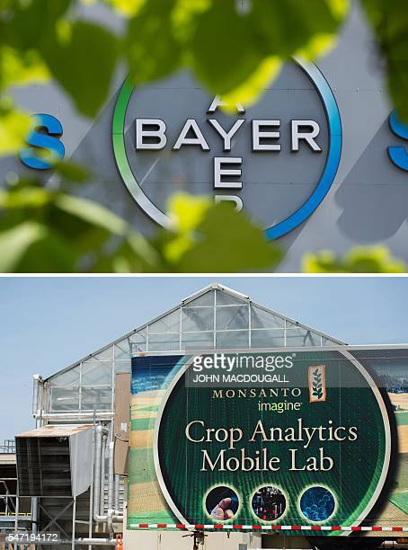 This combination of pictures created on July 14 2016 shows the logo of German pharmaceutical giant Bayer and a building on the campus of Monsanto...