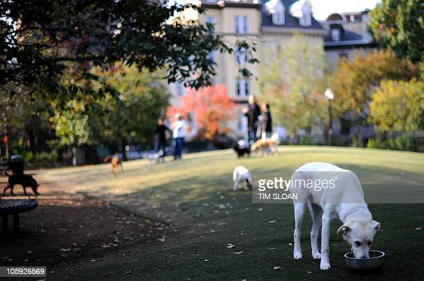 This dog park is furnished with a special dog friendly astroturf that allows urine to pass through and is easy to clean on October 21 2010 at the S...