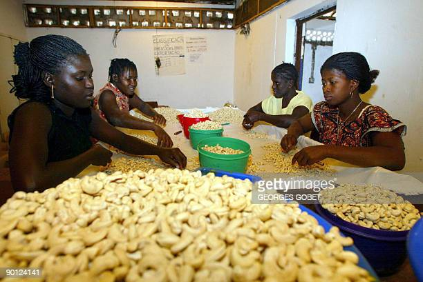 This file photo taken on February 8 2002 in Quinhamel shows women peeling cashew nuts in a small nut factory GuineaBissau a poor West African country...