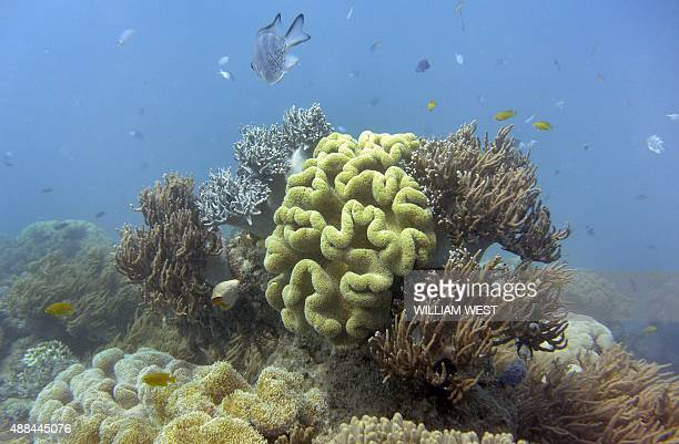 This file photo taken on September 22 shows fish swimming through the coral on Australia's Great Barrier Reef Populations of marine mammals birds...