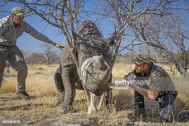 This handout image released by Kensington Palace on January 19 shows Prince Harry who is the new Patron of Rhino Conservation Botswana following his...