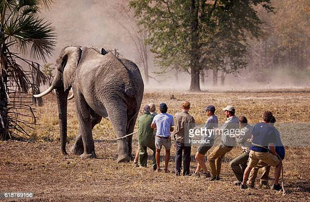 This handout image released by Kensington Palace on October 28 2016 shows Prince Harry while he worked in Malawi with African Parks as part of an...