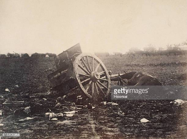 This horse was killed while hauling an ammunition cart at the Battle of Gettysburg 1863 During the battle over 1500 artillery horses were killed