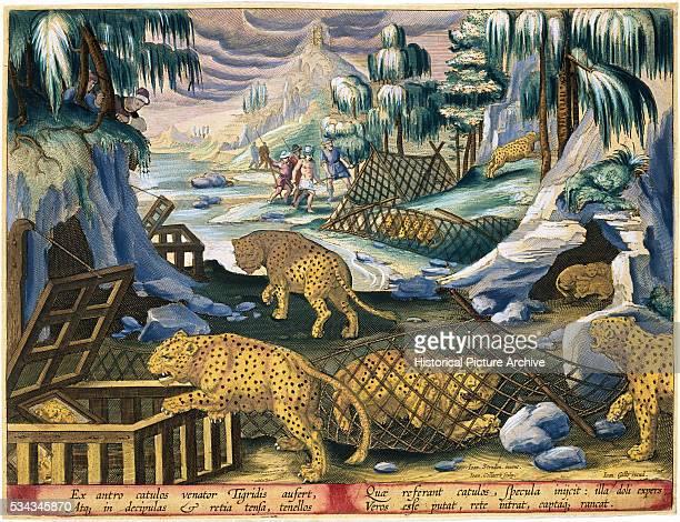 'This illustration was published by Phillipus Gallaeus of Amsterdam in the Book Venationes Ferarum Avium Piscium '