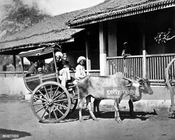 This image shows an Ekka bullock cart in Bombay India ca 1920s