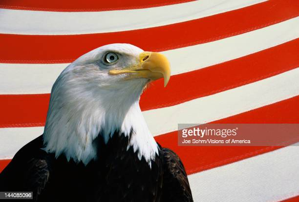 This is a bust of an American bald eagle looking out toward the right He is set against a background of red and white stripes from the American flag...
